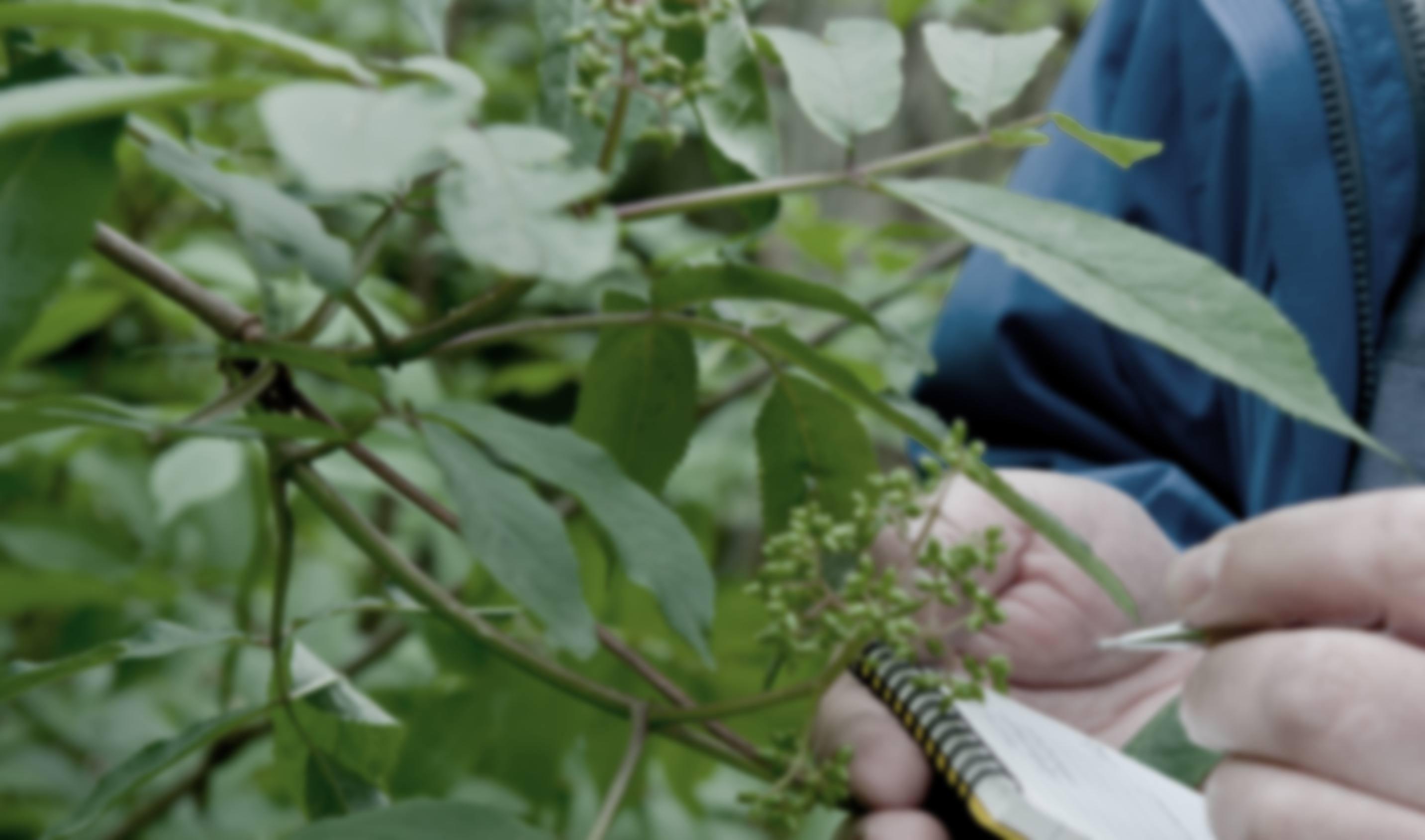 Botany5