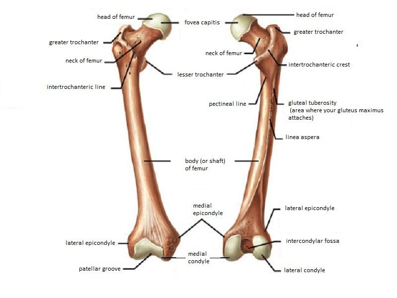 Leg & Foot